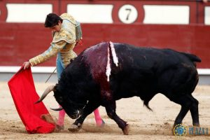 Madrid-Castella-Jandilla
