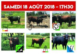 Saint Gilles-concours2018