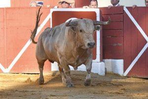 Orthez-prieto de la cal
