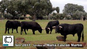 Aire-2017-Maria Cascon