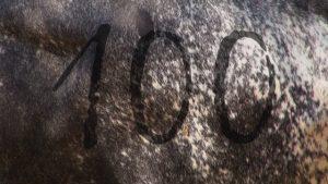signes du toro-100-émission