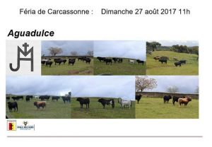 Carcassonne-Aguadulce2017