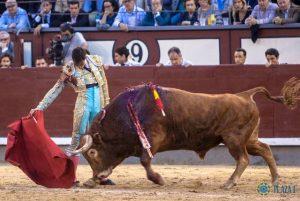 Madrid-Fortes-Pedraza