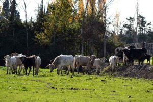 Campo-ganaderia-La Pampa