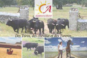 Andalucia2-campo2020